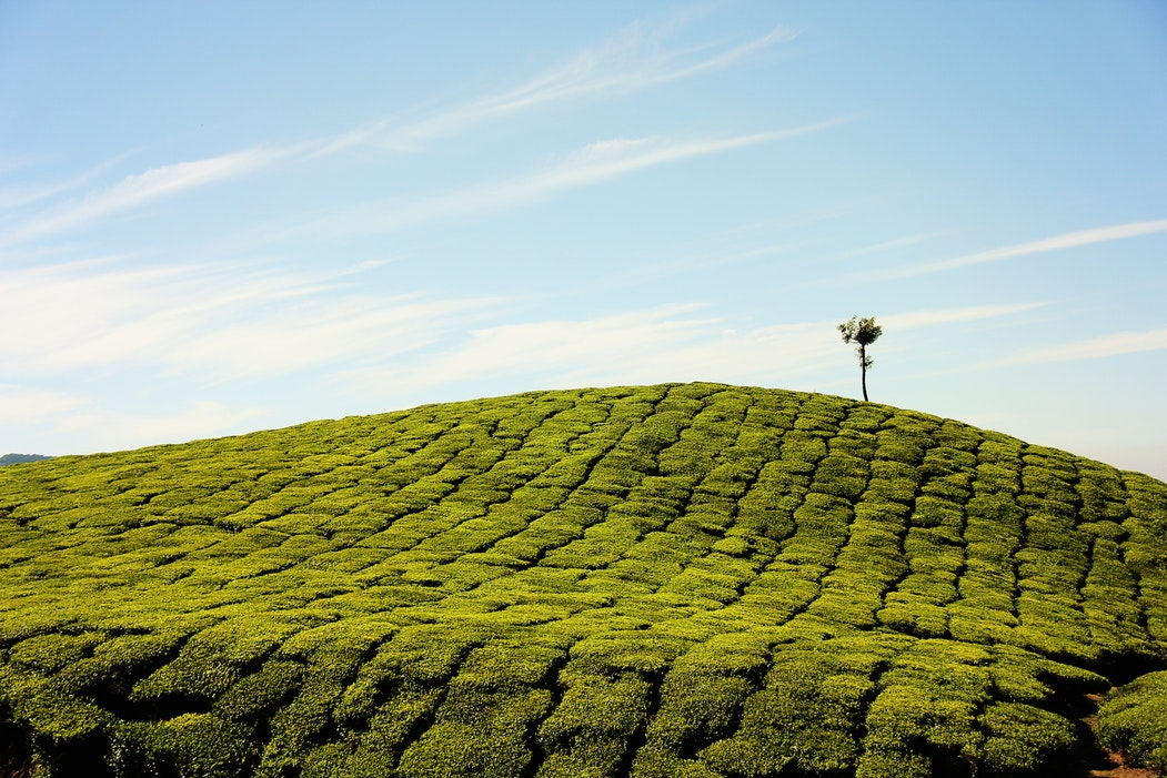 GTE Attestation Deadline Draws Near – Are Your Green Tea NHP's Ready?